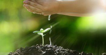 En barnhand vattnar en planta i morgonljus