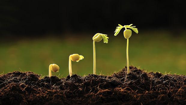 Frö växer i jord.
