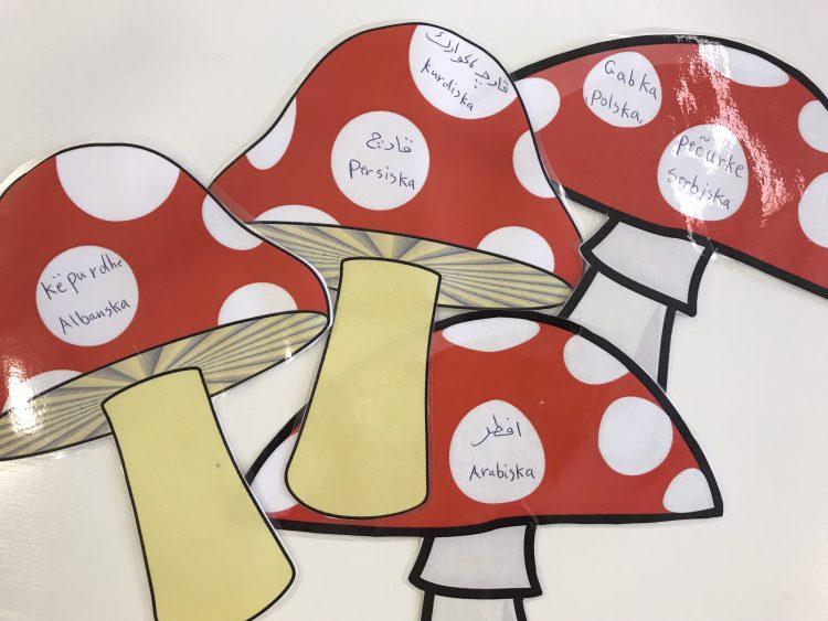 Svampar med ordet svamp skrivet på olika språk.