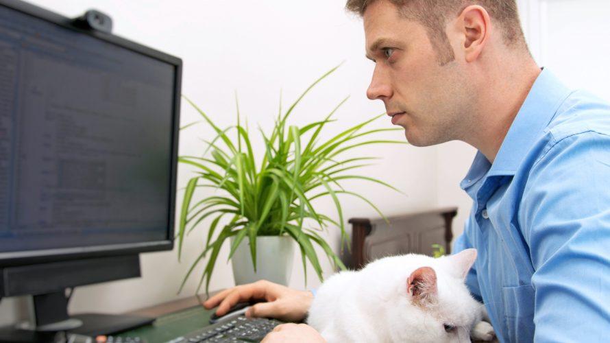Man programmerar med katt i famnen.