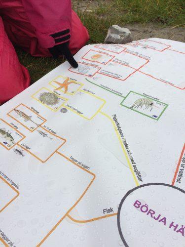 Barn pekar på bilder på stort papper.