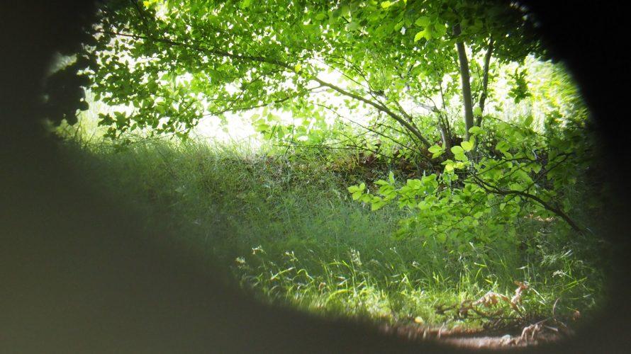 Grön skog.