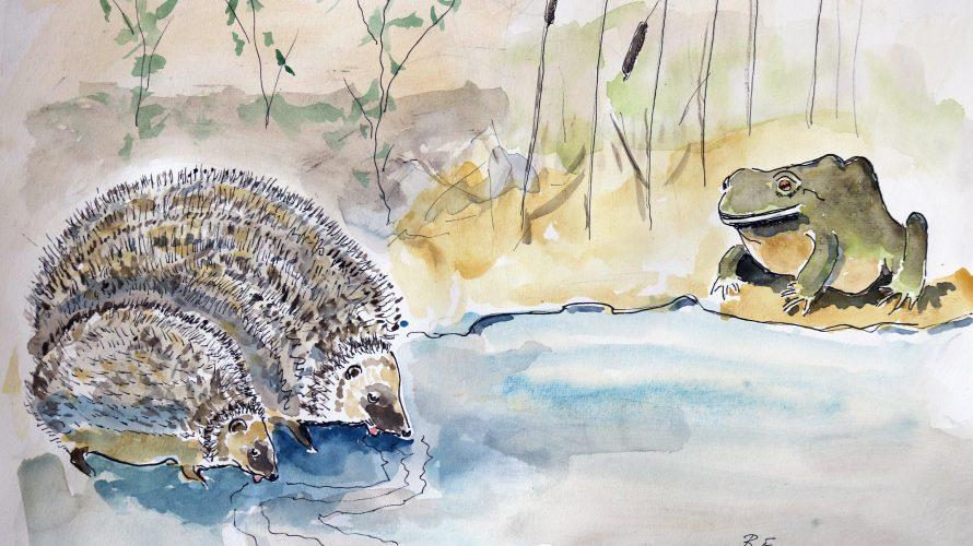 Akvarellmålning av igelkottar och padda.
