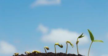 Frö som växer i jord.
