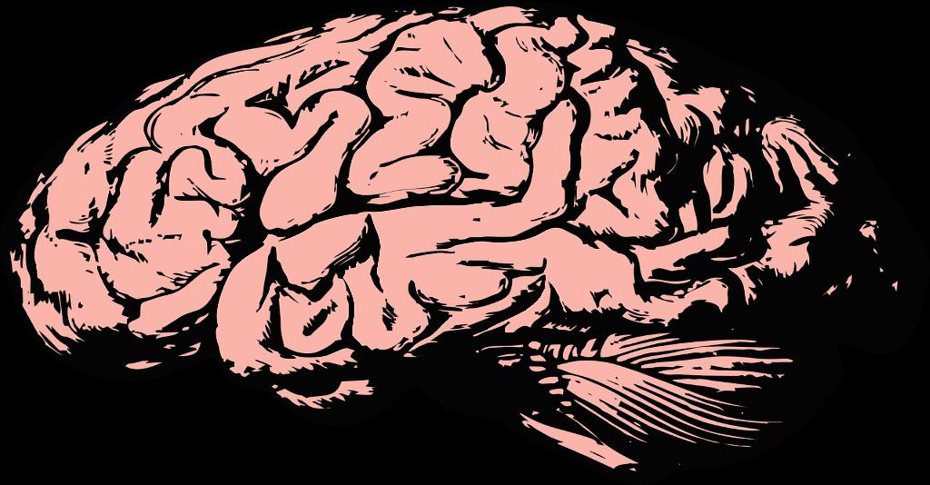 En rosa hjärna.