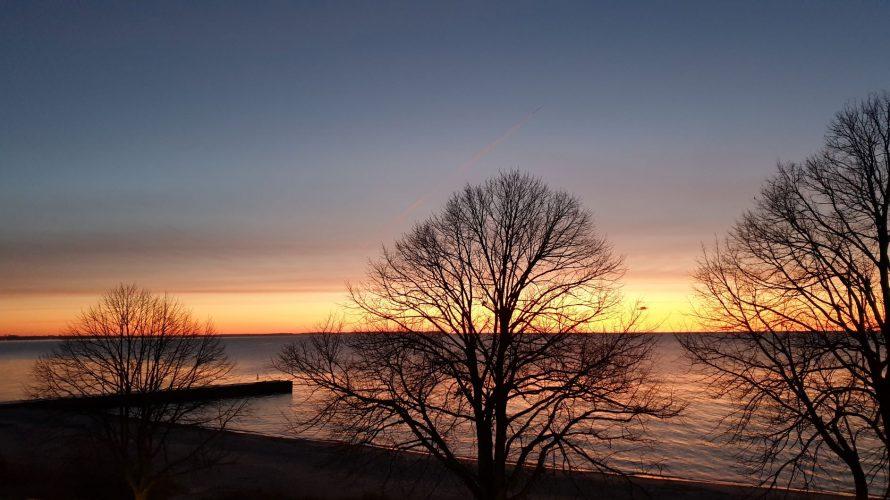 Solnedgång över hav med bara träd i förgrunden.