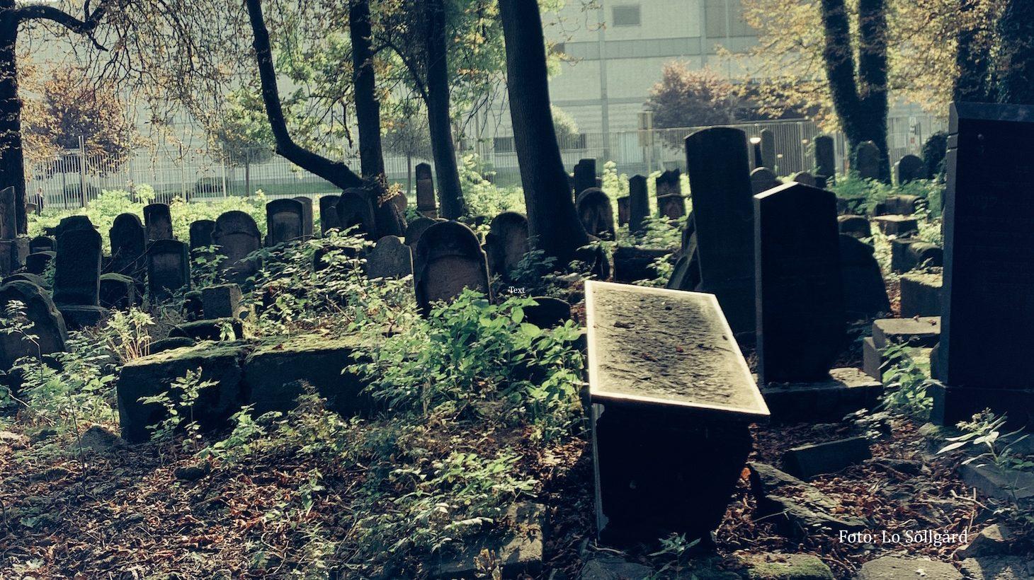 Kyrkogård med många gravstenar.