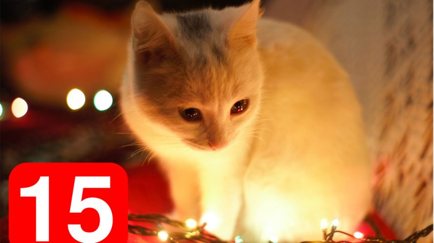 Katt och siffran 15.