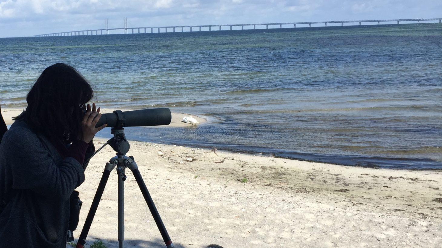 Kvinna kikar genom kikare ut över Öresund där bron syns i bakgrunden.