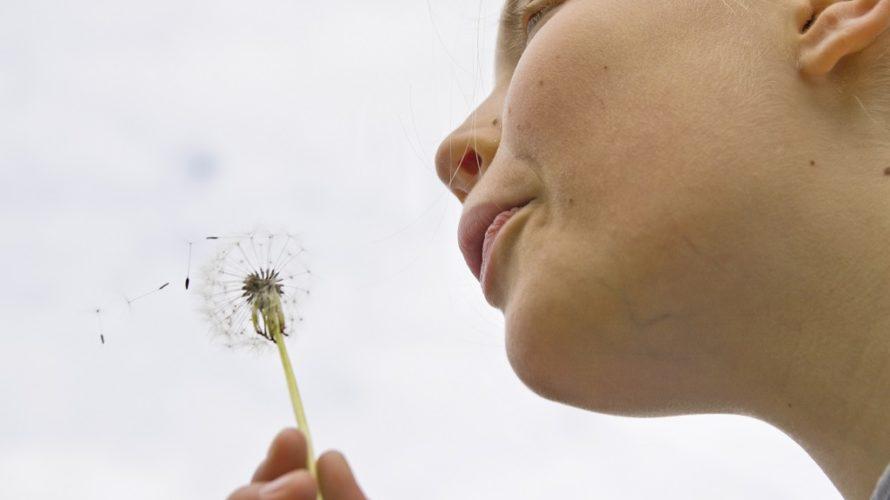 Flicka blåser på en maskrosboll.