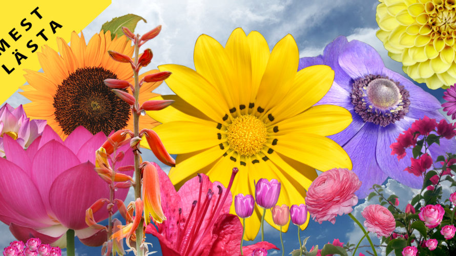 """Bilden visar färgglada blommor med texten """"mest lästa"""""""