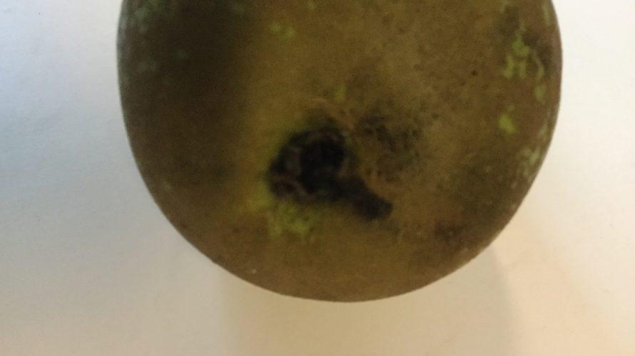 Botten av ett päron.