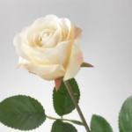 En vit ros.