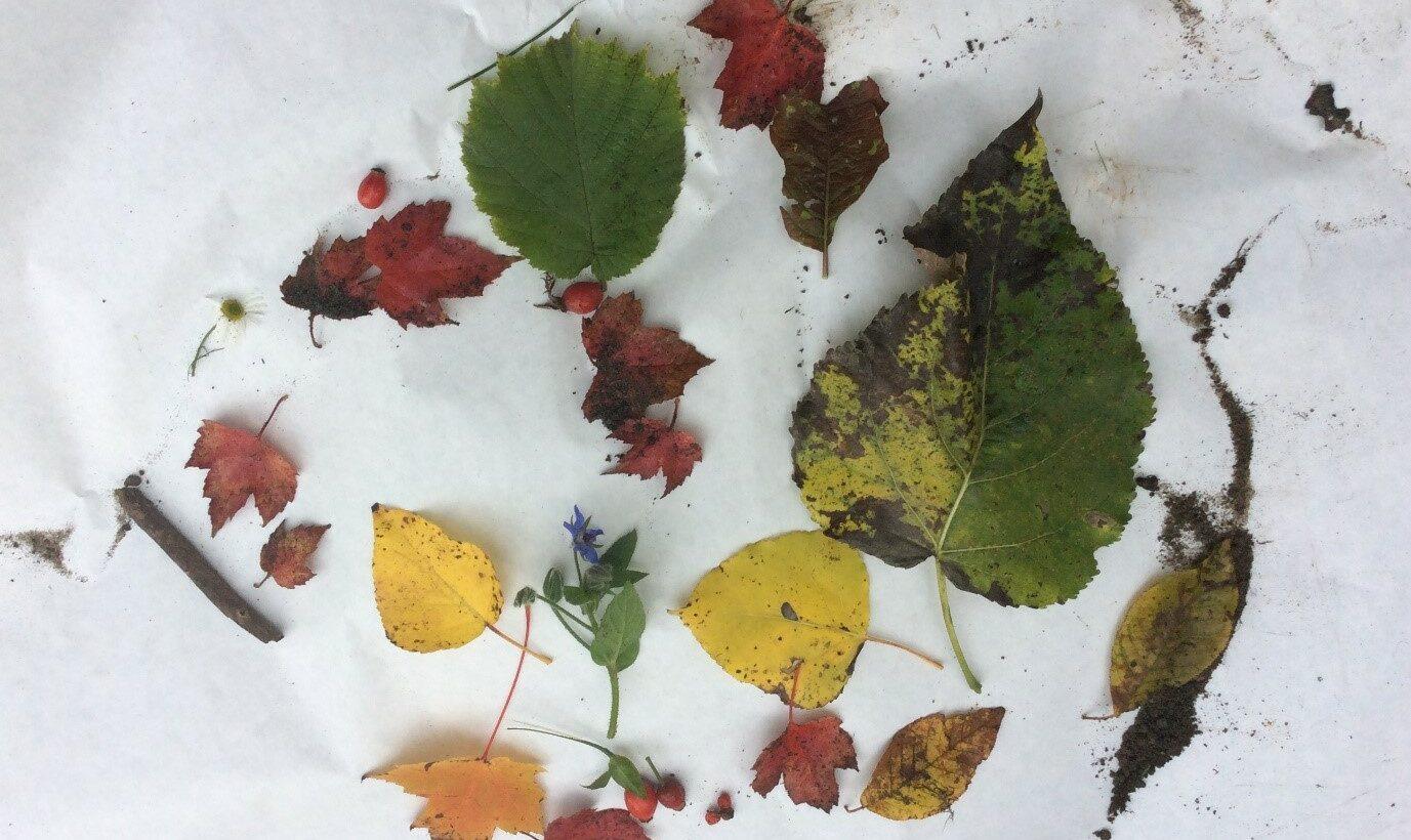 Löv i olika färger på en vit bakgrund