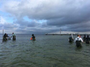 Personer i vadarbyxor står i vattnet i Öresund.