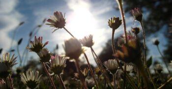 Blommor på en äng.