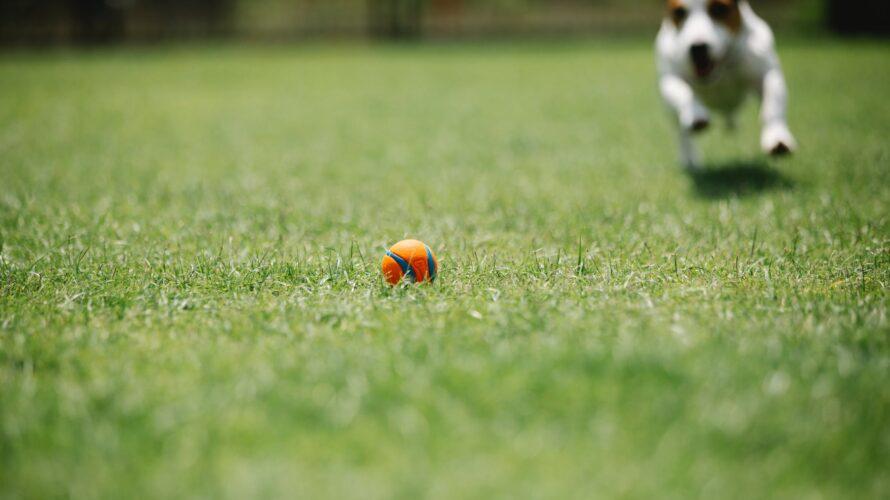 Hund springer efter boll.
